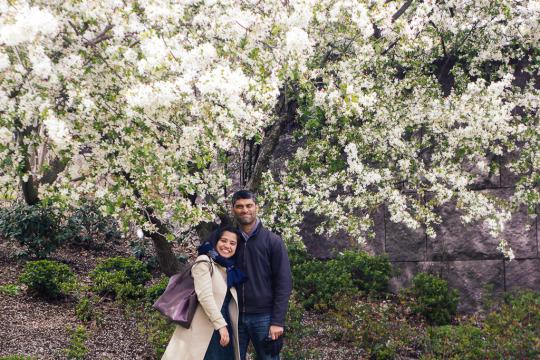 cherry blossoms Washington DC FDR