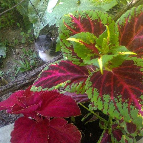 #gardening #cat #kitty #kitten