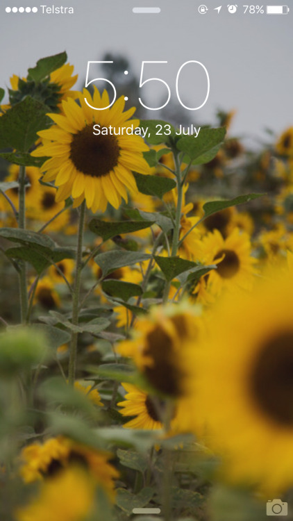 Yellow Iphone Wallpaper Quotes Sunflower Background Tumblr