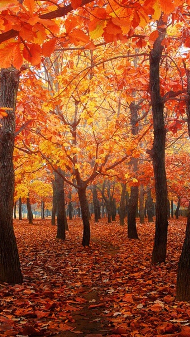 Fall Leaves Wallpaper Windows 7 Backgrounds