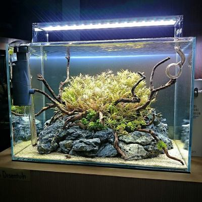 Simon's Aquascape Blog