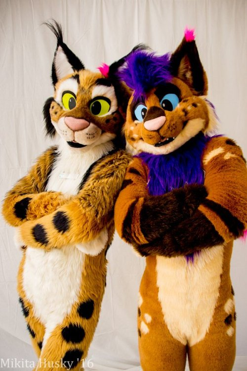 Feline Fursuit  Tumblr