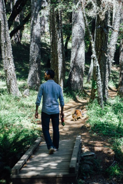 Best Hikes In Marin With Dogs