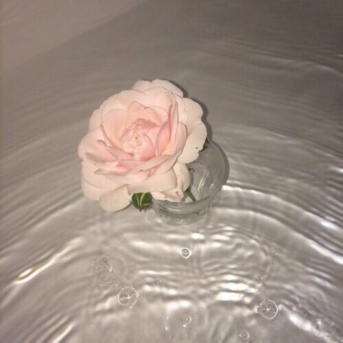 Aesthetic Rose  Tumblr