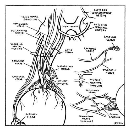 cranial nerves on Tumblr