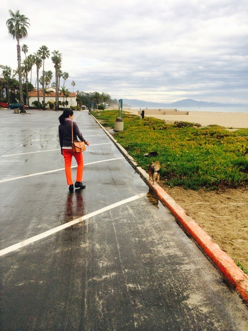Motel 6: a dog friendly lodging in Santa Barbara