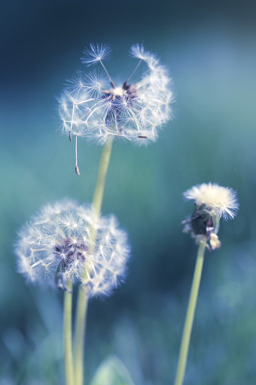 Flower Wallpaper With Friendship Quotes Dandelion Wish Quotes Tumblr