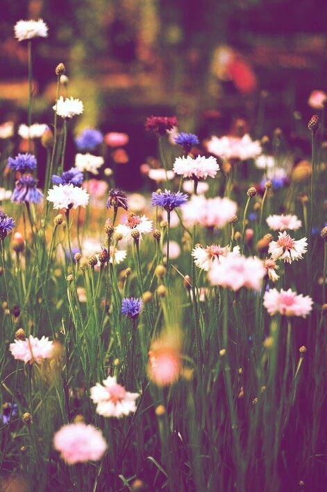 Cute Hipster Iphone Wallpaper Daisy Flowers Iphone Wallpaper Tumblr