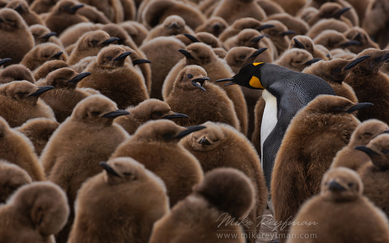 Talk show Mike Reyfman