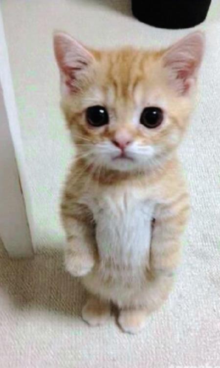Cute Kittens Wallpaper For Iphone Fondos De Gatos Tumblr