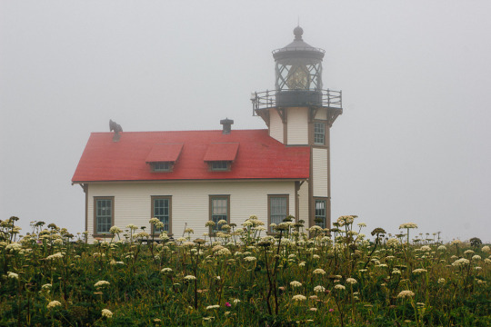 dog friendly mendocino, what to do with your dog in mendocino, dog friendly guide to mendocino