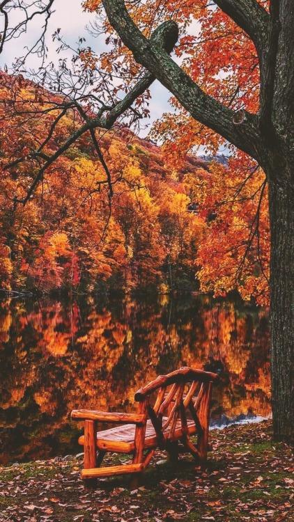 Pumpkin Fall Iphone Wallpaper Cute Fall Background Tumblr