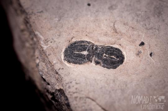 adventure fossils desert southwest trilobites digging collecting hounding rock Utah dig