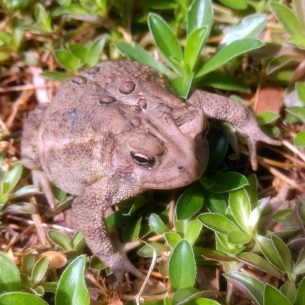 Had a new visitor in the garden today… He thought he was camouflaged, but I saw him