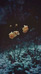 aesthetic backgrounds overlays flower notes reblog