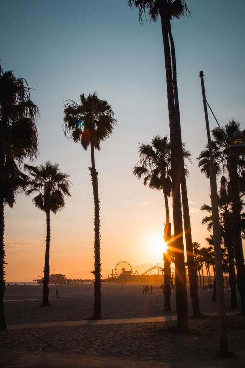 palm trees on Tumblr