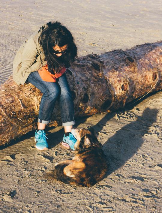 Kehoe beach dog friendly beaches point reyes point reyes national seashore kehoe beach trail