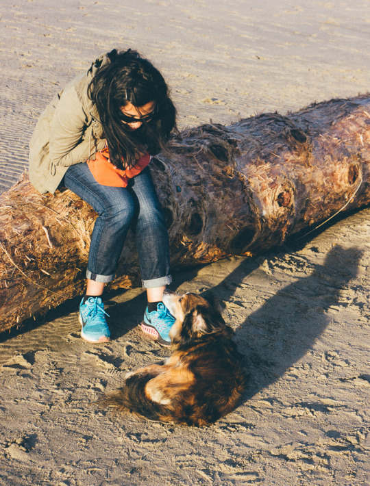 Kehoe Beach Point Reyes:A dog friendly beach In Northern California