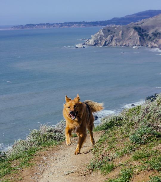 Bay area day trips dog friendly