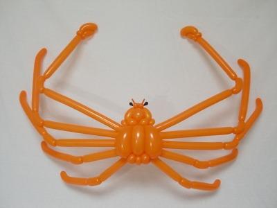 タカアシガニ Japanese spider crab 2017.1.8