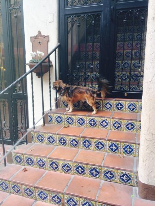 dog friendly downtown Santa Barbara