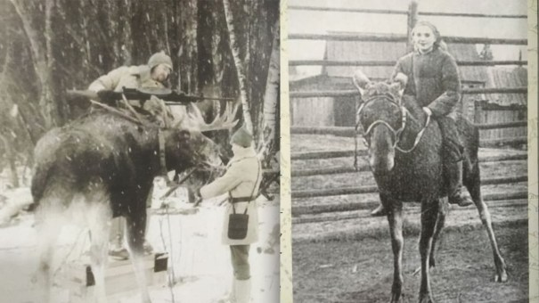 War moose of the red army via reddit between 1934 1937 the red war moose of the red army via reddit between 1934 1937 the red malvernweather Gallery