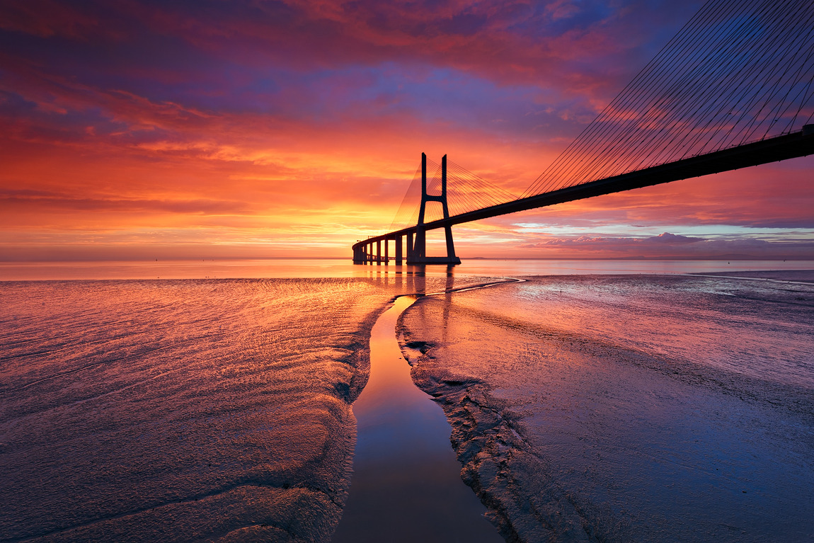 Animal Desktop Wallpaper Free Fallin Vasco Da Gama Bridge Lisbon Portugal By
