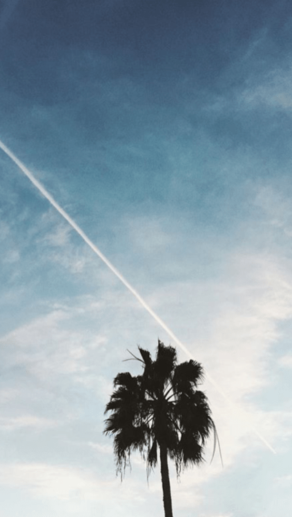 Lockscreen Quotes Wallpaper Palm Trees Backgrounds Tumblr