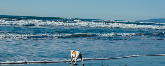 dog friendly San Francisco, dog friendly guide, dog friendly spots in San Francisco, where to take your dog in San Francisco, dog friendly beaches, San Francisco beaches, dogs at beaches, SF beaches that welcome dogs, Fort Funston