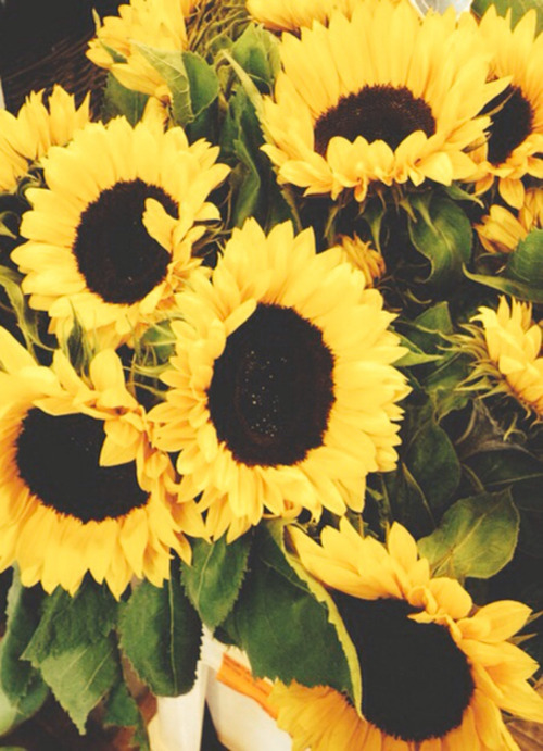 Cute Quote Wallpaper For Iphone 4 Sunflowers Header Tumblr
