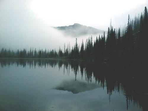 vintage nature on Tumblr