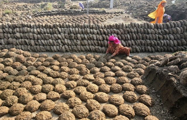 Indian Women making Cow Dung Cakes