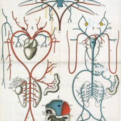 3 Chambered Heart Diagram Wiring For Speakers Science Visualized  Vintage Zoology Wall Charts From The