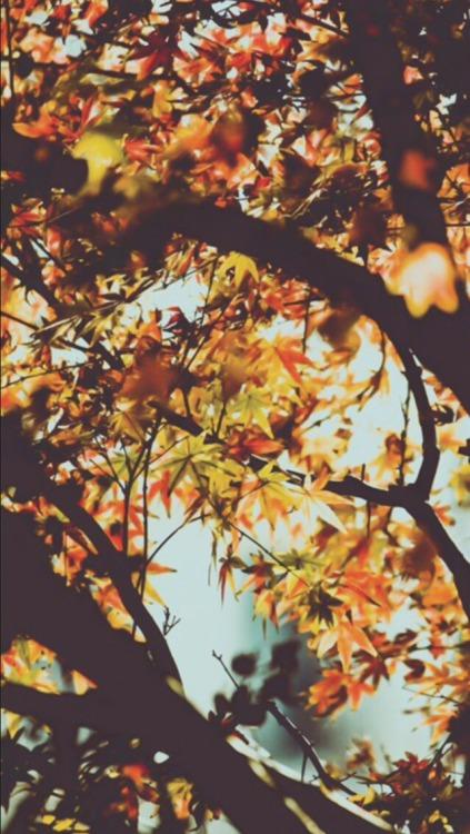 Free Fall Tree Wallpaper Autumn Wallpaper Tumblr
