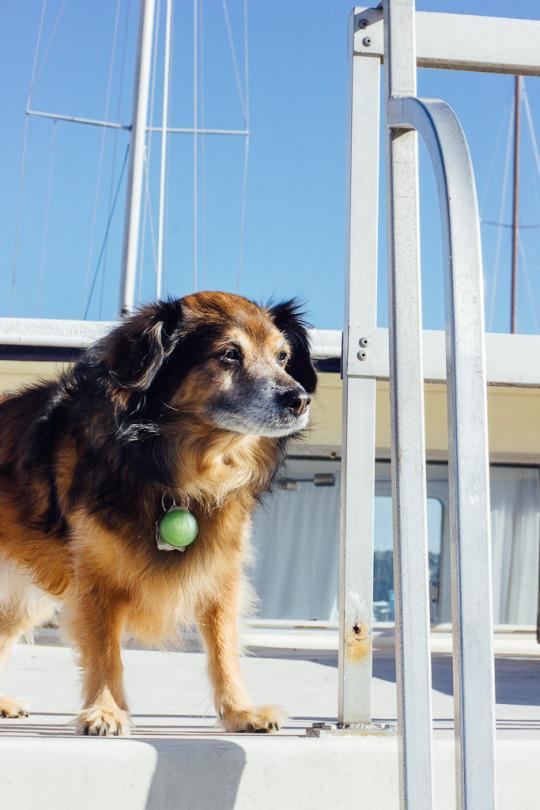 Sausalito Restaurants Dog Friendly