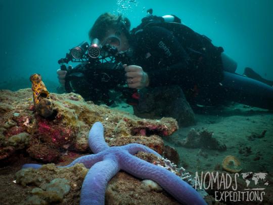 underwater photography ocean sea Indonesia marine indo pacific tropical coral reef diving scuba snorkel animal wild color Bali filming blue sea star starfish