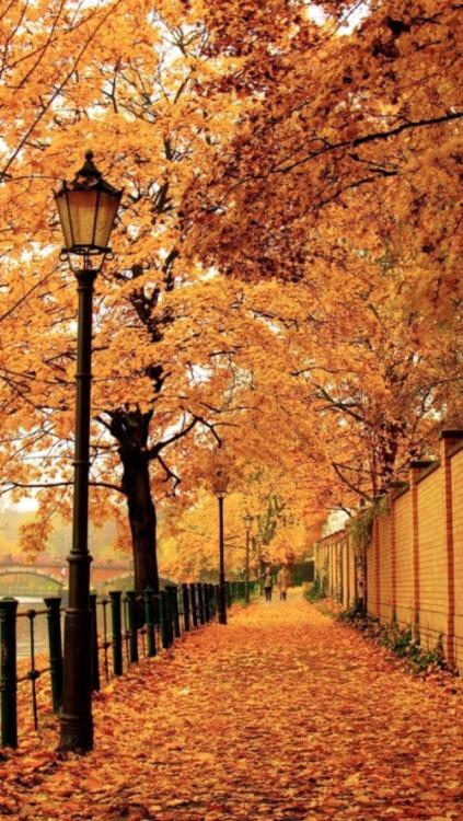 Pure Michigan Fall Wallpaper Hello Autumn Tumblr