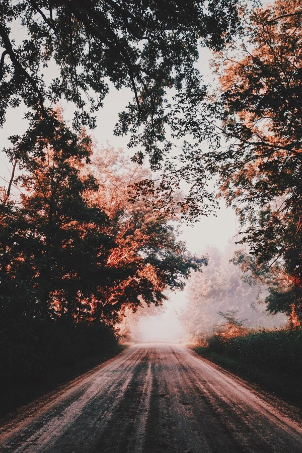 Aesthetic Fall Nature Photography