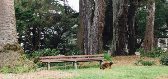 dog friendly San Francisco, dog friendly guide, dog friendly spots in San Francisco, where to take your dog in San Francisco, dog friendly parks in San Francisco, dog friendly SF parks, dog parks in SF, SF dog parks, San Francisco dog parks, Sutro Park, Ocean Beach