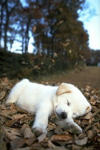 Cute Puppy Images Wallpaper Fluffy Cute Puppies Tumblr