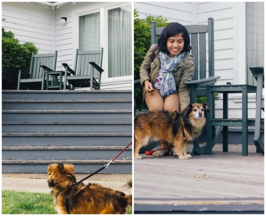 dog friendly hotels in Mendocino, where to stay with your dog in Mendocino, Mendocino and Fort Bragg pet friendly hotels