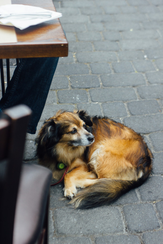 dog friendly restaurants Carmel, dog friendly dining carmel, dog friendly carmel, dog friendly guide to carmel