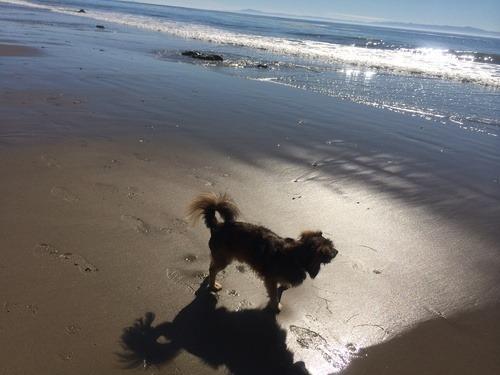 pet friendly beaches in Santa Barbara