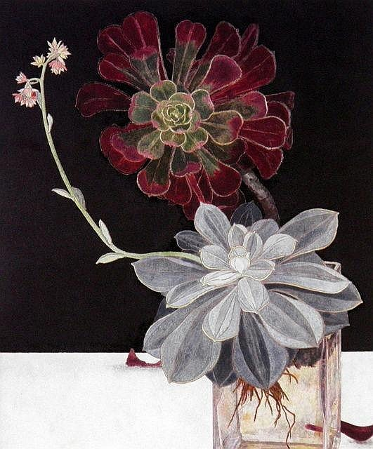 "huariqueje:"" Sanseveria( in Glass (Echevarria) - Cressida CampbellAustralian , b.1960-Decorative Bookplate , 28cm x 22cm,"""
