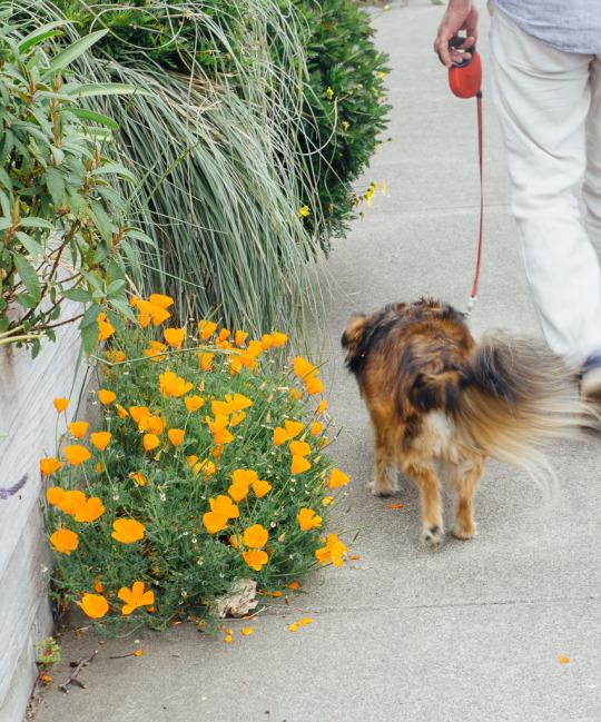 dog friendly guide to Mendocino, dog friendly restaurants in Mendocino, dog friendly beaches in Mendocino, downtown Mendocino, pet friendly activities in Mendocino