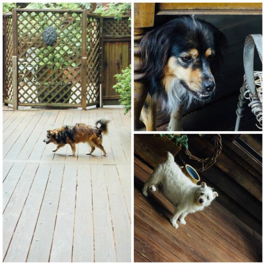Santa Cruz Boardwalk Dog Friendly