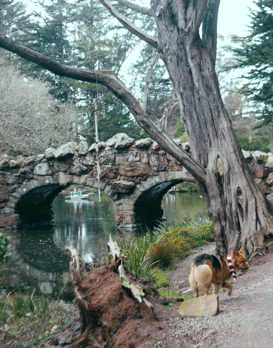 dog friendly San Francisco, dog friendly guide, dog friendly spots in San Francisco, where to take your dog in San Francisco, dog friendly parks in San Francisco, Strawberry Hill, Golden gate park, dog friendly SF parks, dog parks in SF, SF dog parks, San Francisco dog parks