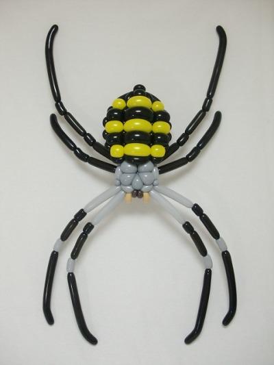 コガネグモ spider (Argiope amoena) 2017.4.23