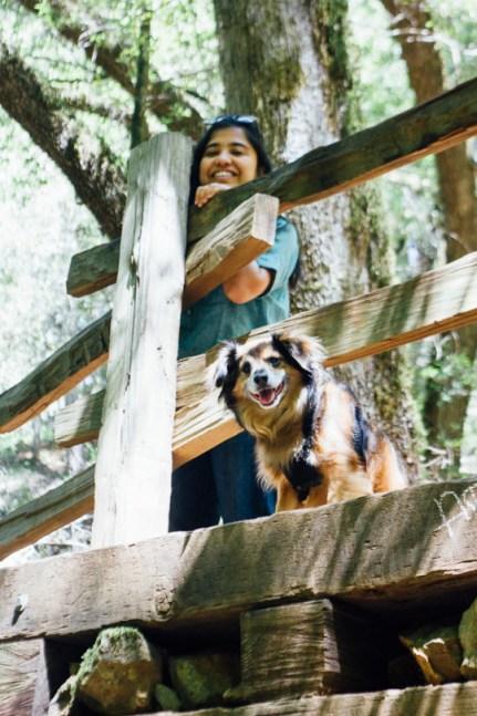 waterfall hikes bay area, Waterfall hiking trails, hiking trails to waterfalls in the Bay Area, dog friendly waterfall hikes in the Bay Area, Bay Area hiking trails with waterfalls, Cascade Falls, Cataract Falls, Mt. Tamalpais, Marin waterfalls