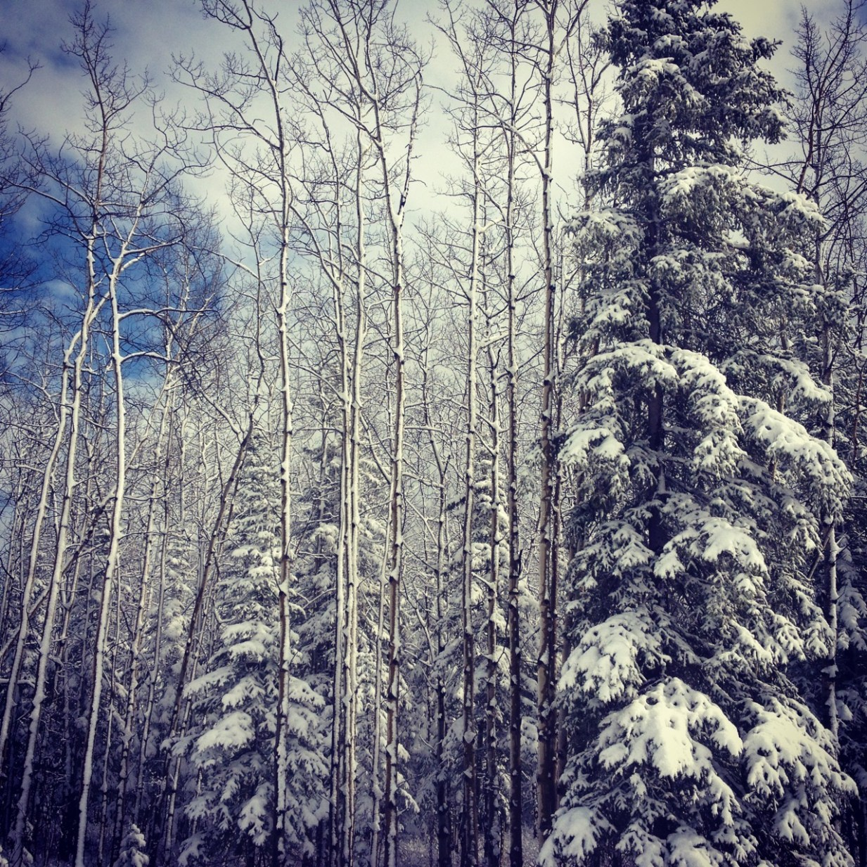 It snowed quite a bit during my second week, blanketing the trees in beautiful white powder